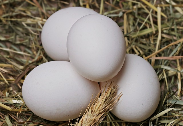 Белок куриных яиц может быть использован в борьбе с инфекционной катаральной лихорадкой домашнего скота