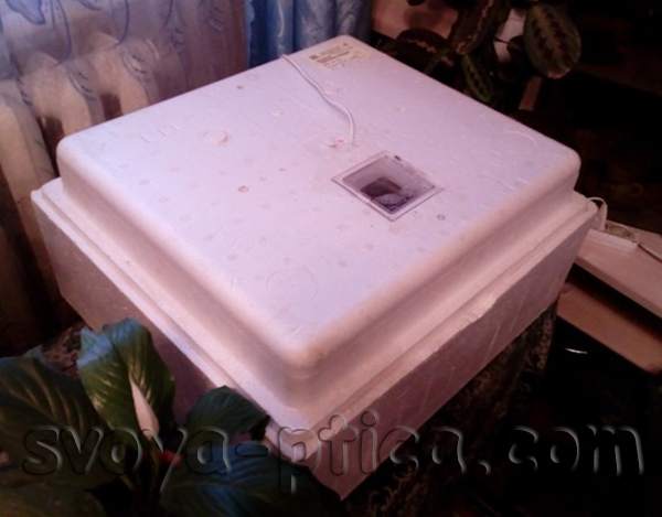 Выведение гусят в инкубаторе в домашних условиях