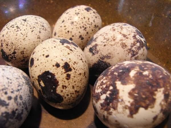 Яйца японских перепелок