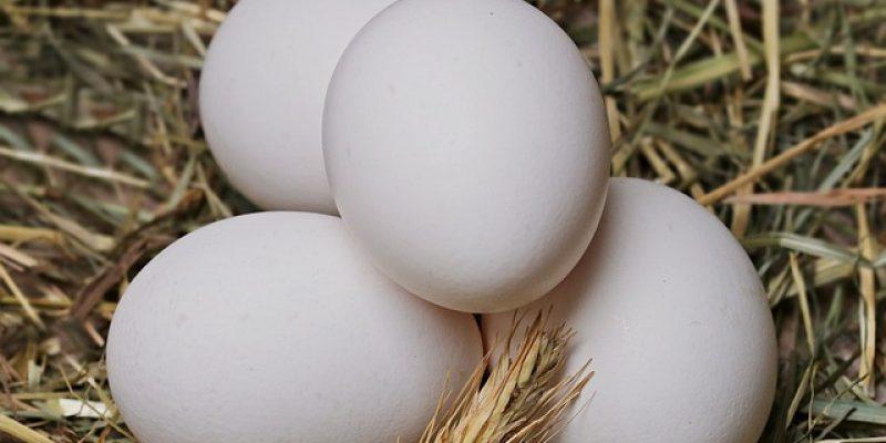 ВЕЛИКОБРИТАНИЯ: Белок куриных яиц может помочь в борьбе с инфекционной катаральной лихорадкой домашнего скота