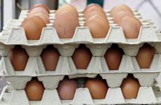 ТАЙВАНЬ: Более 42 000 кур-несушек подлежат выбраковке из-за диоксинового скандала