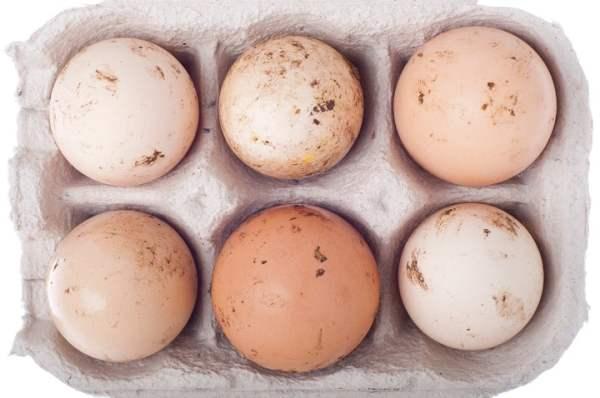 Проблемы яйцекладки кур - грязные яйца