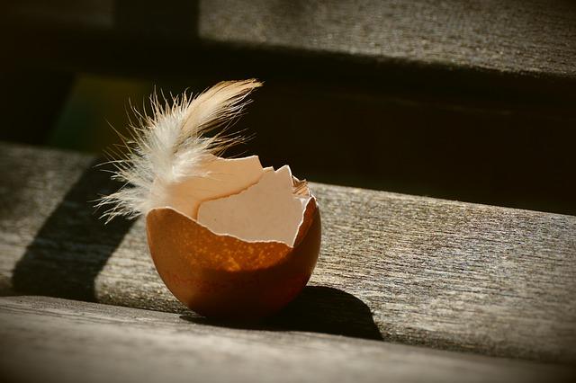 Тонкая скорлупа яиц у кур
