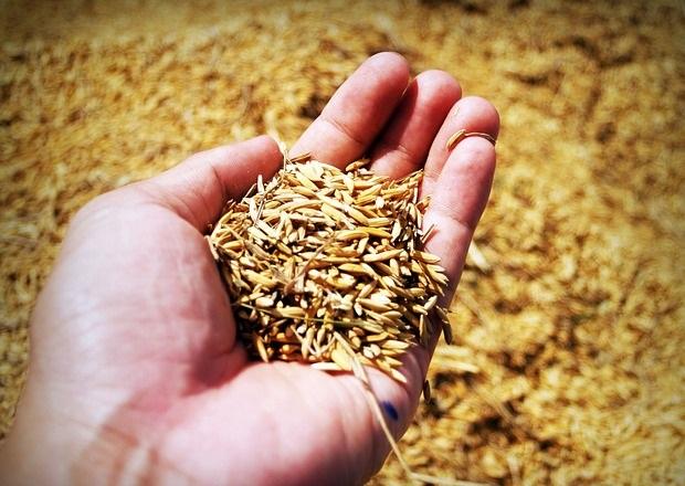 Союз птицеводов предлагает отсрочить уплату НДС с зерновых кормов и молодняка кур