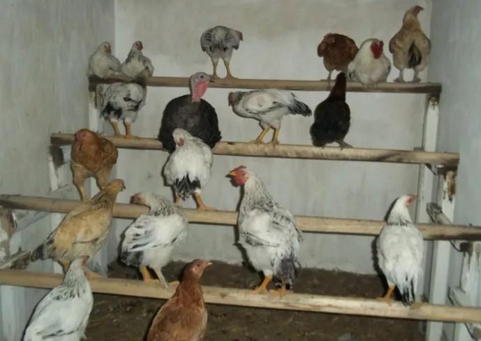 насест для домашних кур