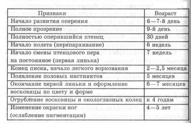 таблицы для определения возраста голубя
