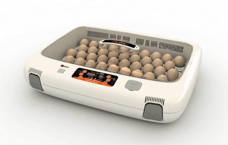 инкубатор для яиц
