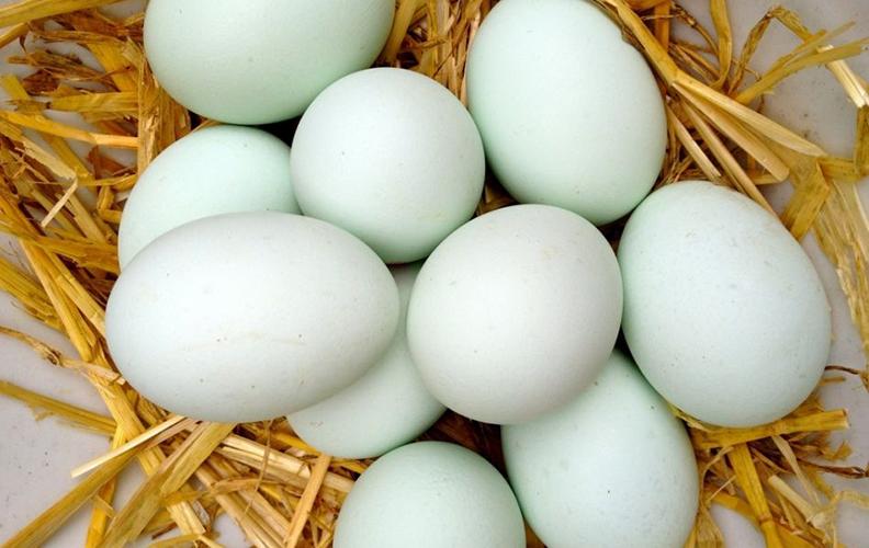 Отбор и подготовка яиц