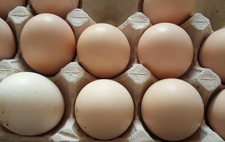 Яйца кур фавероль