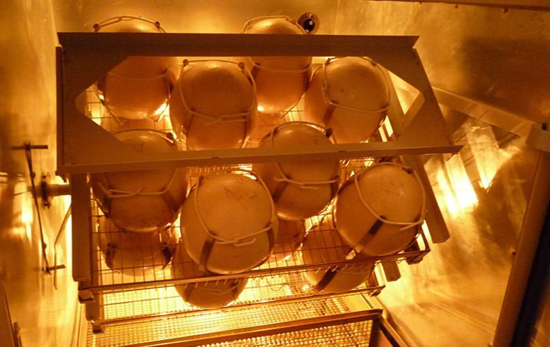 Страцсинные яйца в инкубаторе