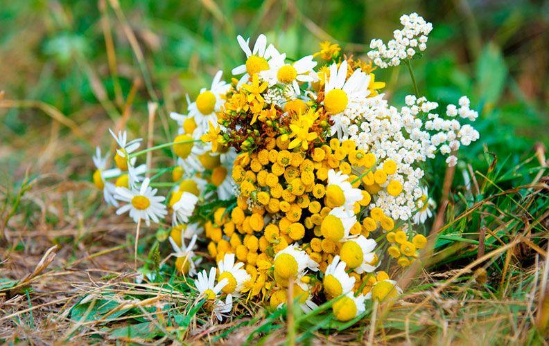 Травы от пухопероеда