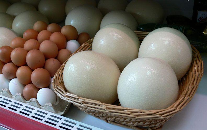 Куриные и страусиные яйца