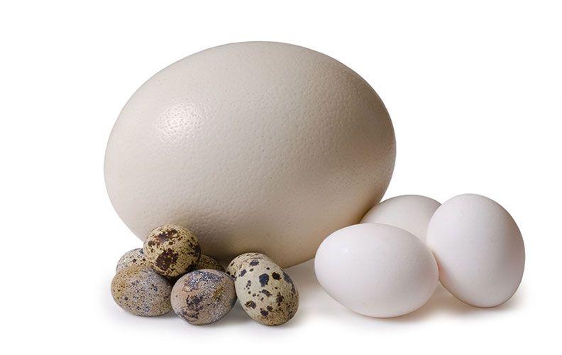 Яйца страуса, курицы и перепелки