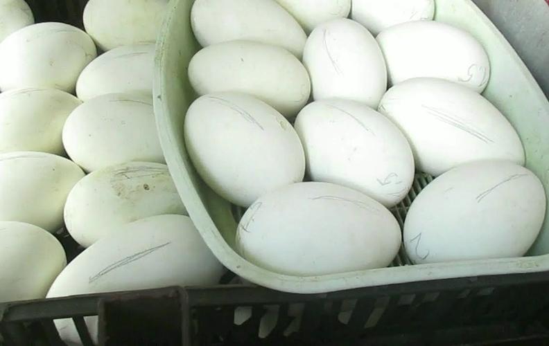 Гусиные инкубационные яйца