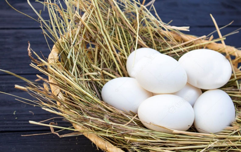 Яйца кур породы аврора