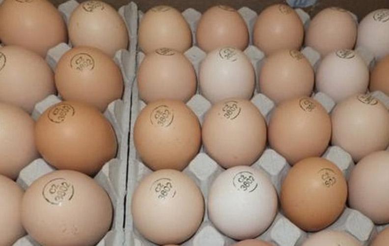 Инкубационные яйца мастер грей