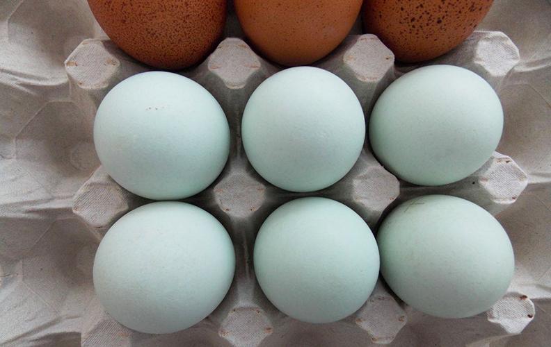 Голубые куриные яйца