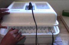 Чем обработать инкубатор перед закладкой?
