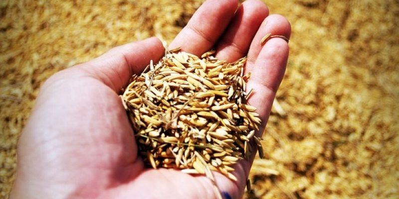 АРМЕНИЯ: Союз птицеводов предлагает отсрочить уплату НДС с зерновых кормов и молодняка кур